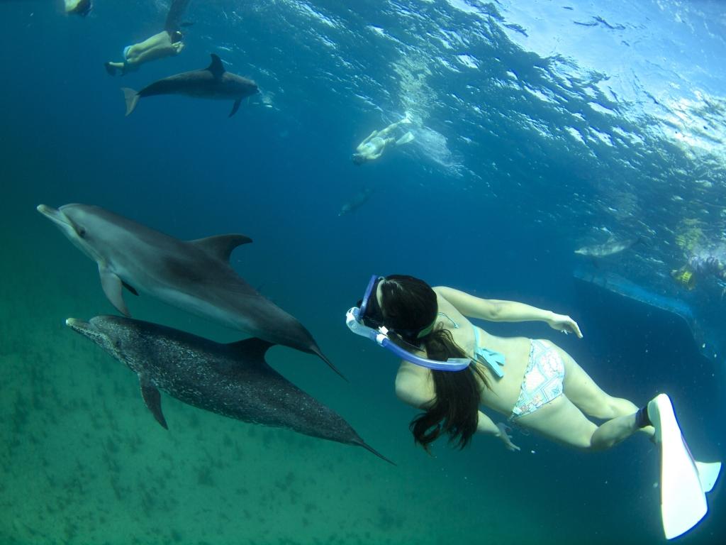 """今年で11年目になるPlayTheEarthの「バハマで野生のイルカ達と遊ぶ旅!」 フロリダ州ウェストパームビ<a href=""""http://play-the-earth.com/dolphin-swim-bahamas-2016/""""><br />…続きを読む</a>"""