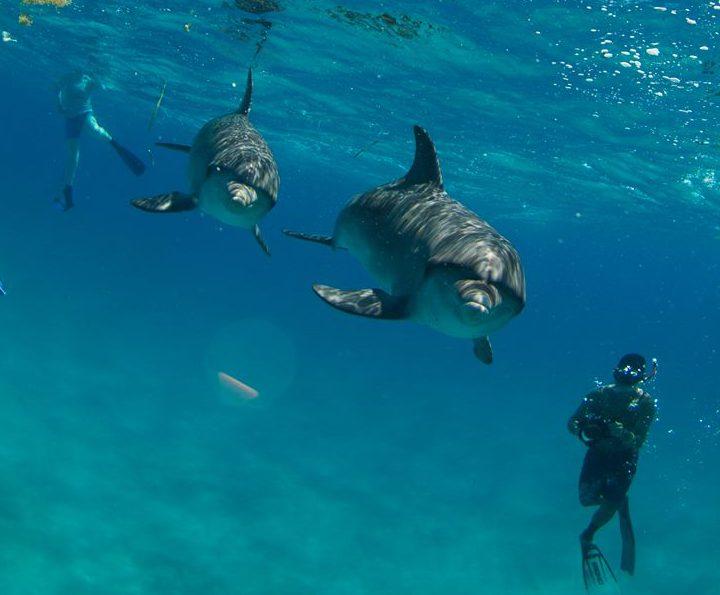 """2018年度のドルフィンスイムツアー in the Bahamas 開催日時が確定致しました!2017年もたく<a href=""""http://play-the-earth.com/dolphin-swim-bahamas-2018-%e9%96%8b%e5%82%ac%e6%b1%ba%e5%ae%9a%ef%bc%81/""""><br />…続きを読む</a>"""